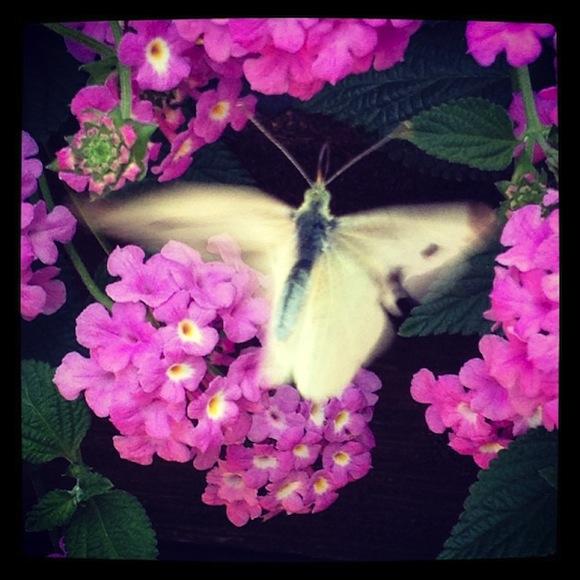 il battito d'ali di una farfalla